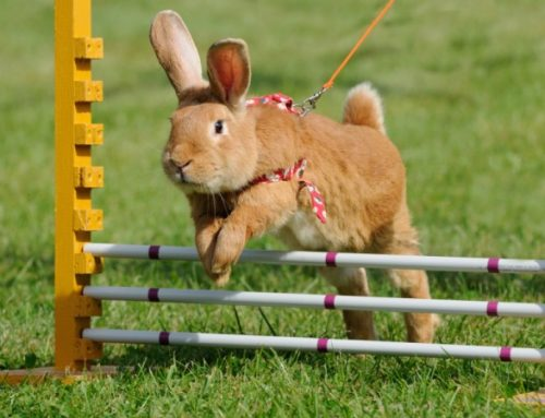 Enriquecimiento ambiental en Conejo