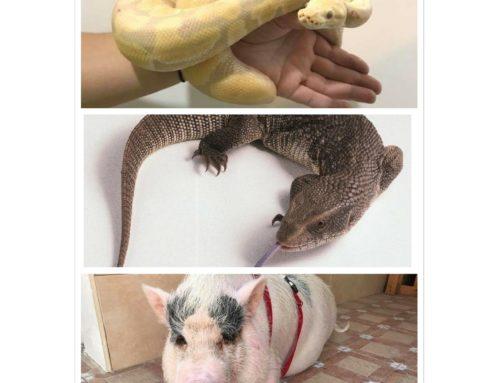 Especies exóticas invasoras; legislación para animales exóticos invasores