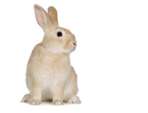 Cuidados básicos de los conejos